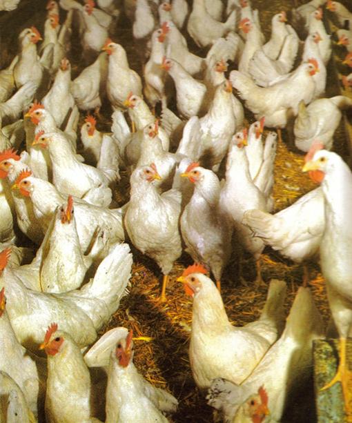 Palacongressi: dàgli ai polli che si credono aquile