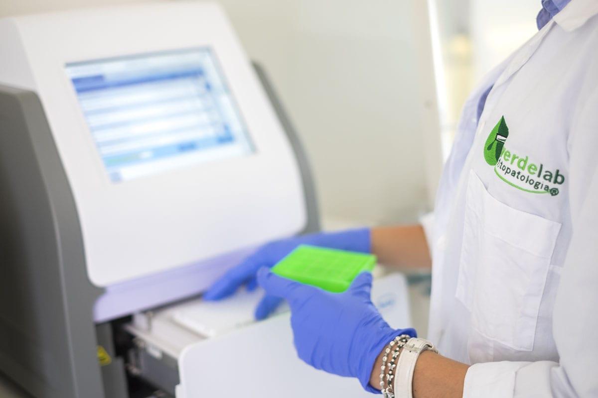 """Frutta e verdura """"doc"""" nascono in laboratorio. L'esperienza di Verdelab: radici a Rimini, clienti in tutto il mondo"""