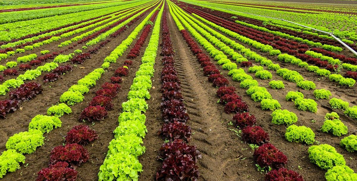 Aziende agricole biologiche: Rimini all'ultimo posto in regione