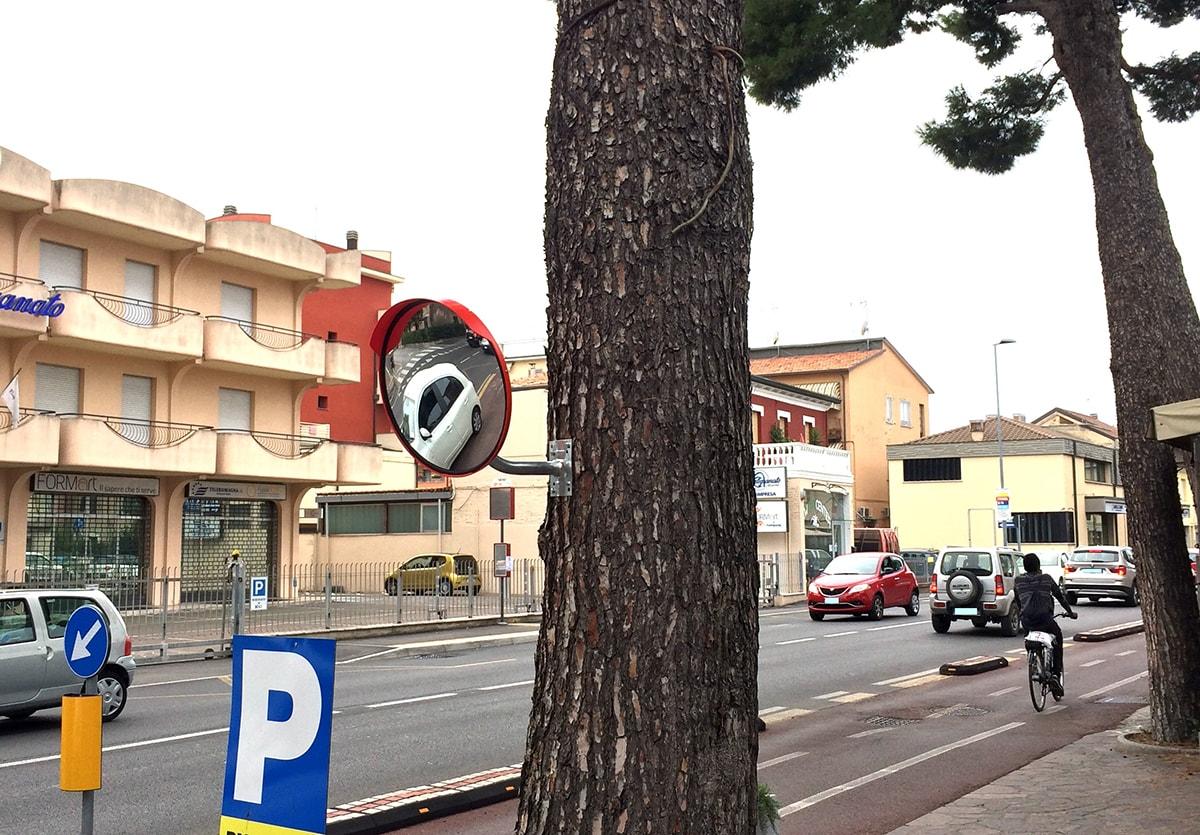 Pinus pinaster speculum: il pino marittimo dai rami a specchio cresce solo a Rimini