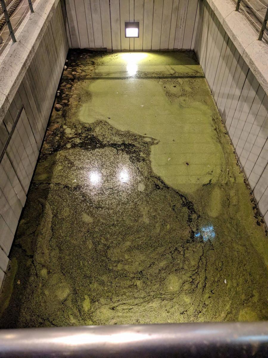 I resti dell'antico selciato del foro romano sono diventati la piscina di Hulk