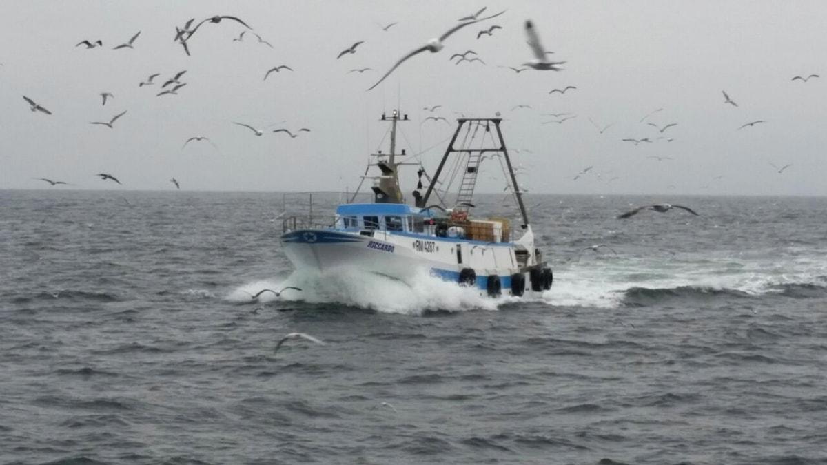 Quando la nostra marineria aveva dieci pescherecci per il pesce azzurro