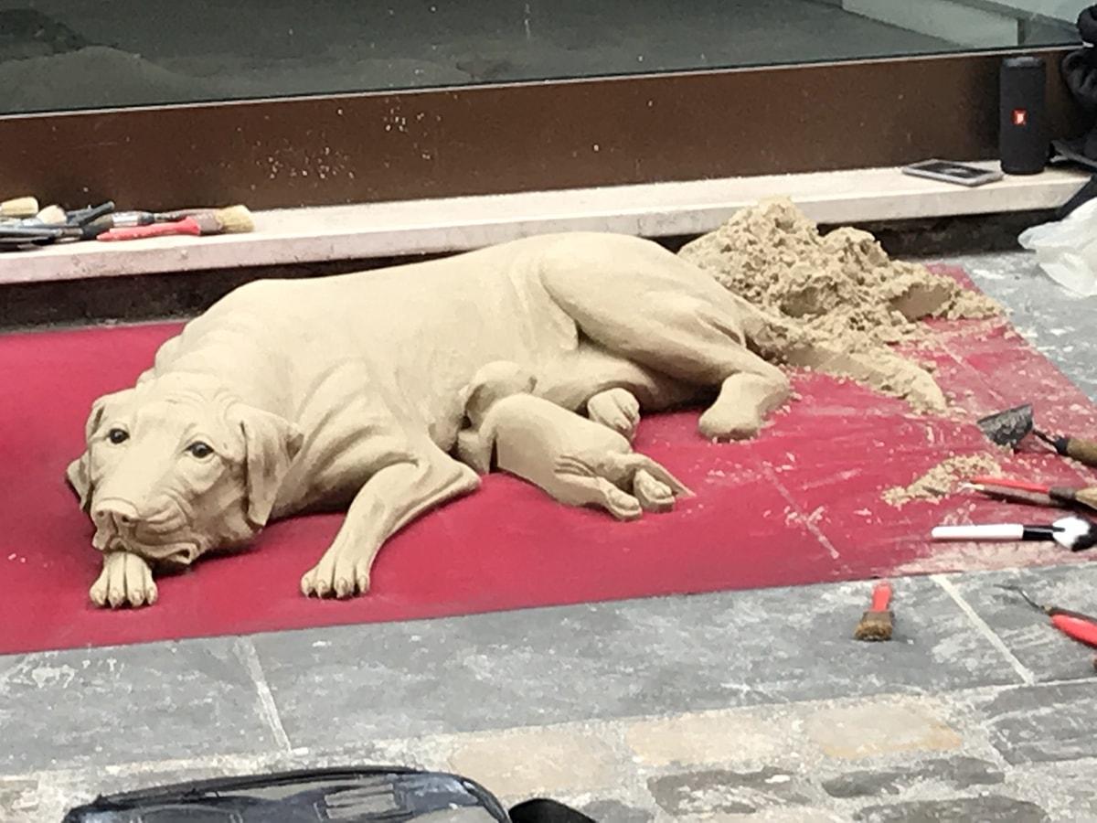 Consiglio ai vigili: il cane di sabbia non sporca, invece…