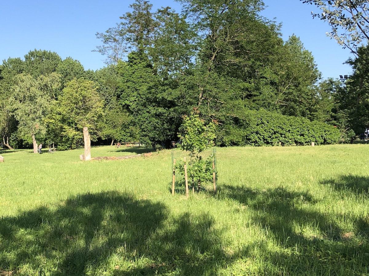 Tre amici e la quercia palustre che cresce nel parco Marecchia