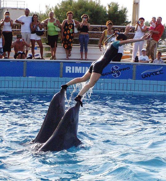 Orse, ruglamerda e delfinario, ovvero l'inquietante ideologia animalista