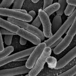 escherichia-coli-min