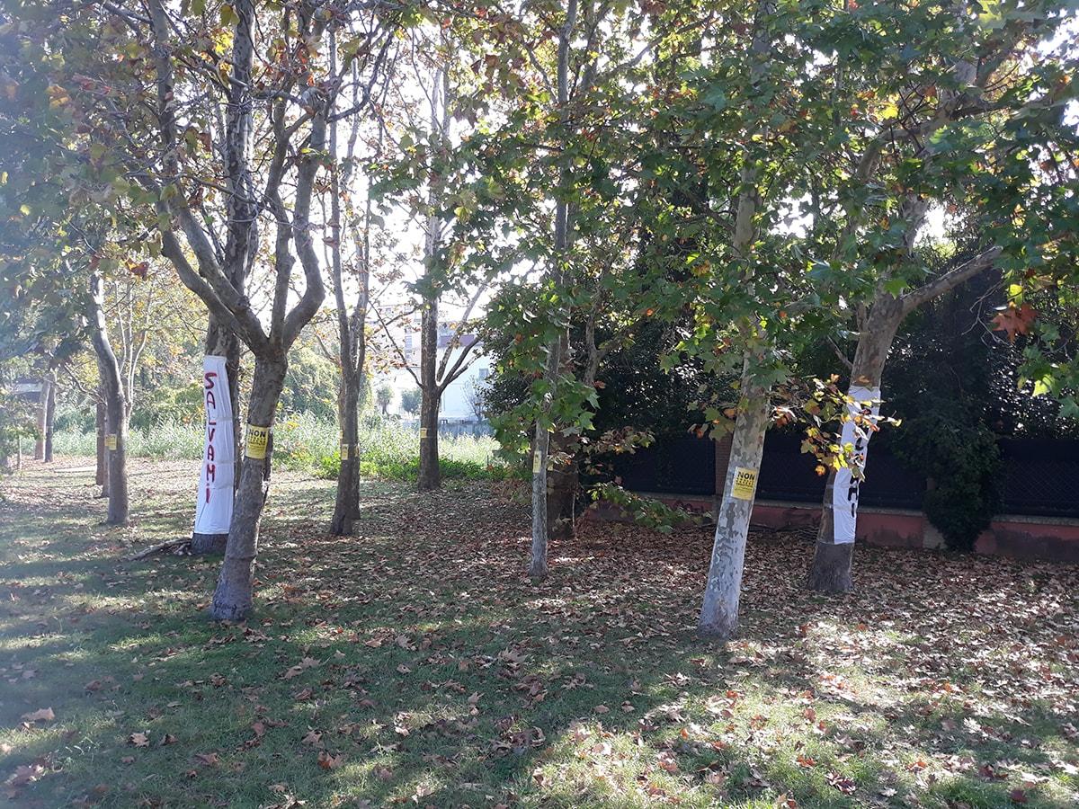 La lettera: cosa insegna la vicenda delle piante destinate a morte nel parco Cervi