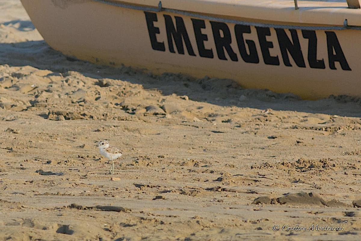 Riaprono le spiagge e occorre tutelare l'avifauna