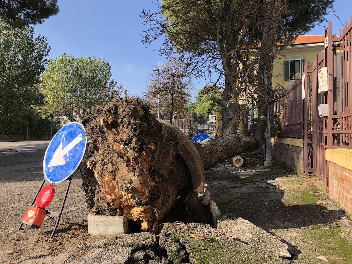 Un grosso albero crolla sull'ingresso del Cemi, fortunatamente chiuso