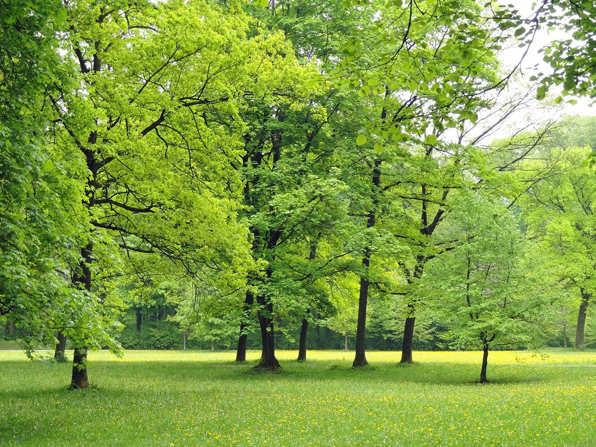Nel comune di Rimini mancano 200 ettari di verde