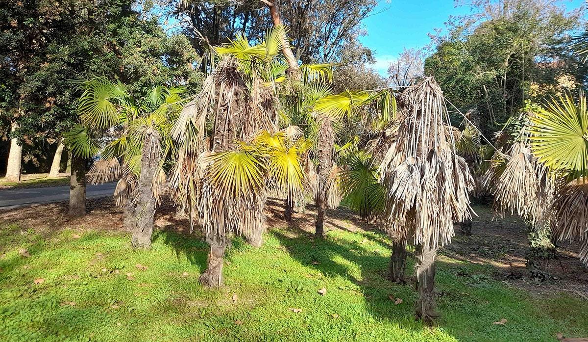 Lettera: «il parco delle palme dimenticate»