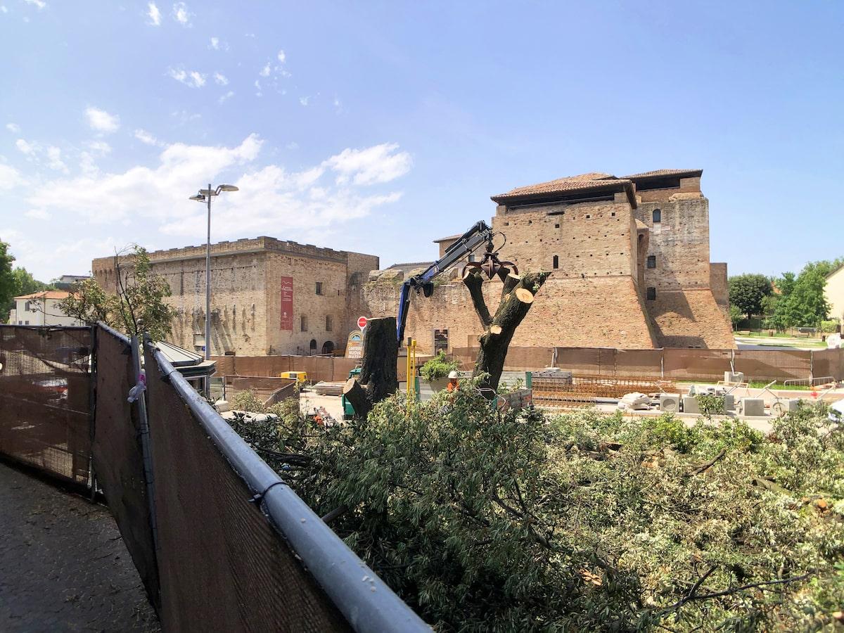 La strage continua: abbattuti anche i lecci di piazza Malatesta
