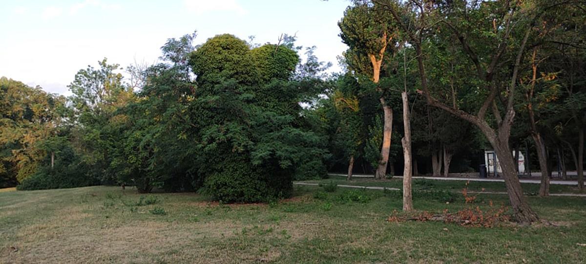 Boschi in città: vegetazione spontanea da tutelare